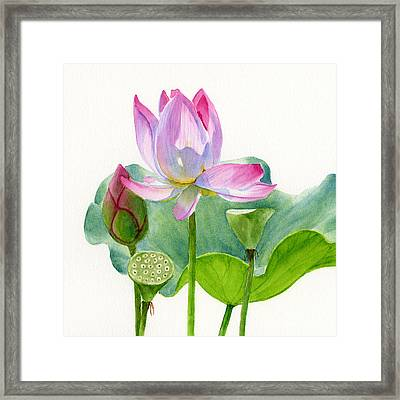 Pink Lotus Blossom With Pad And Bud Framed Print by Sharon Freeman