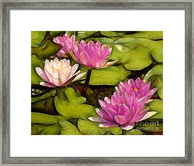 Pink Lotus Blossoms Or Water Lily Flowers Blooming On Pond  Framed Print by Odon Czintos