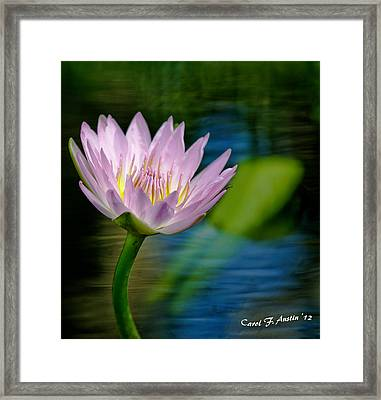 Purple Petals Lotus Flower Impressionism Framed Print by Carol F Austin