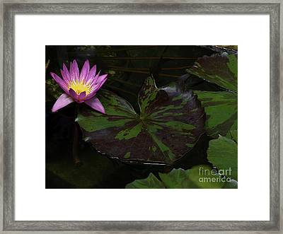 Pink Lotus Flower On Heart Shape Lily Pad Framed Print by Linda Matlow