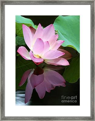 Pink Lotus Reflected In The Lake Framed Print by Sabrina L Ryan