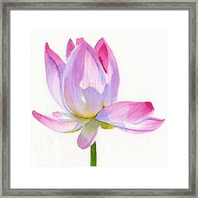 Pink Lotus Square Design Framed Print