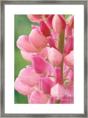 Pink Lupine 974 Framed Print