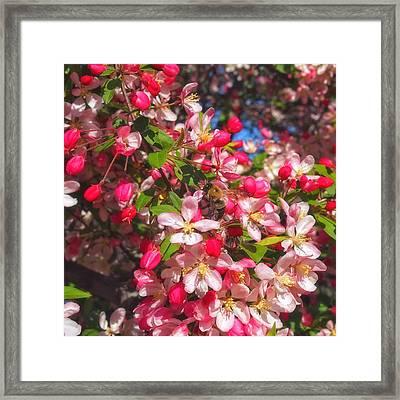 Pink Magnolia 2 Framed Print