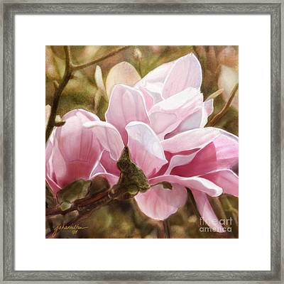 Pink Magnolia One Framed Print by Joan A Hamilton