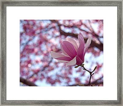 Pink Magnolia Framed Print by Rona Black