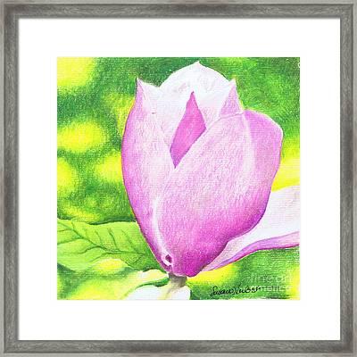 Pink Magnolia Framed Print by Susan Herbst