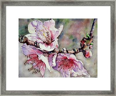 Pink Magnolias Framed Print by June Conte Pryor