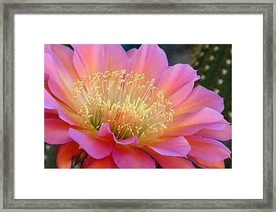 Pink Melody Framed Print by Cindy McDaniel