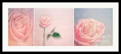 Three Roses Framed Prints