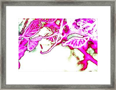 Pink Morning Framed Print by Dorothy Rafferty