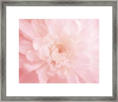 Pink Mum Luminous Painted Blossom Framed Print by Patricia E Sundik