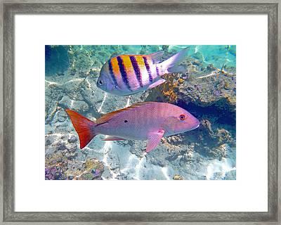Pink Mutton Framed Print by Carey Chen