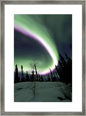 Pink Nights Framed Print