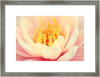 Pink Nymphea Framed Print