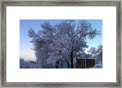 Pink Oak Framed Print