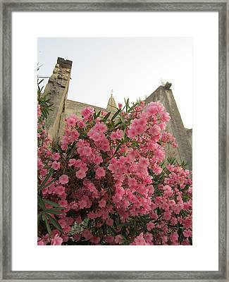 Pink Oleander Framed Print by Pema Hou