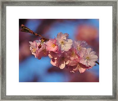 Framed Print featuring the photograph Pink On Bleu by Paul Noble