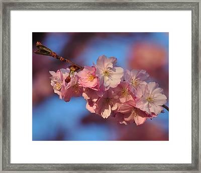 Pink On Bleu Framed Print