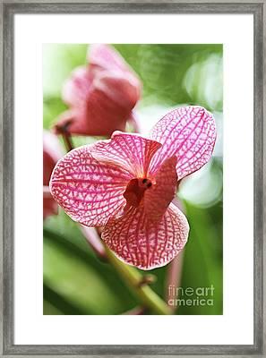 Pink Orchid I Framed Print by Pamela Gail Torres