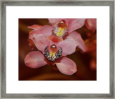 Pink Orchid Framed Print by Mustafa Abdullah