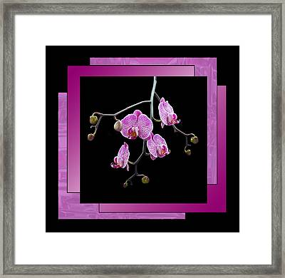 Framed Print featuring the photograph Framed Orchid Spray by Patti Deters