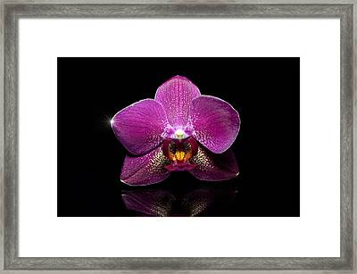 Pink Orchid With Reflection Framed Print by Tommytechno Sweden