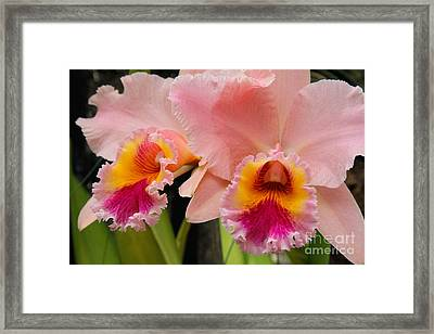 Pink Orchids 2 Framed Print by Chris Scroggins