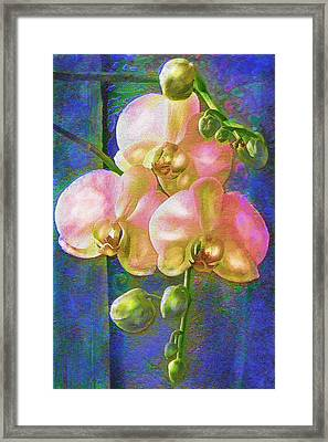 Pink Orchids Framed Print by Jane Schnetlage