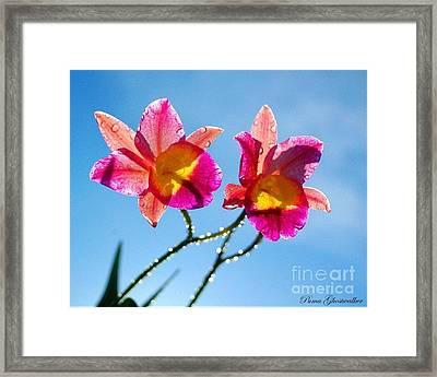 Pink Orchids Framed Print by Puma Ghostwalker
