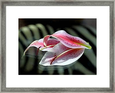 Pink Oriental Lily Reassembled 2 Framed Print