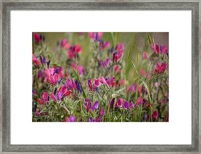 Framed Print featuring the photograph Pink Outburst by Uri Baruch