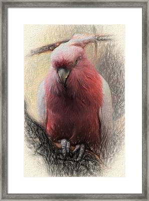 Pink Painted Parrot Framed Print
