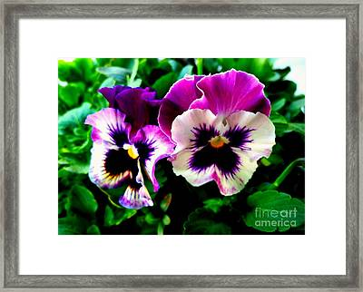 Violet Pansies Framed Print