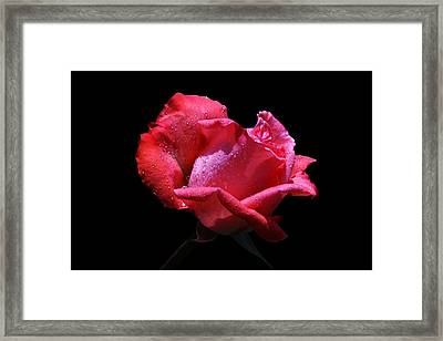 Framed Print featuring the photograph Pink Panther by Doug Norkum