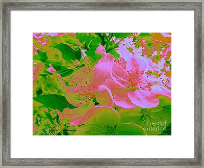 Pink Passion Crabapple Framed Print