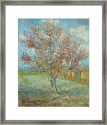 Pink Peach Tree In Blossom Framed Print