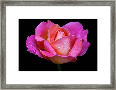Framed Print featuring the photograph Pink Pearl by Doug Norkum