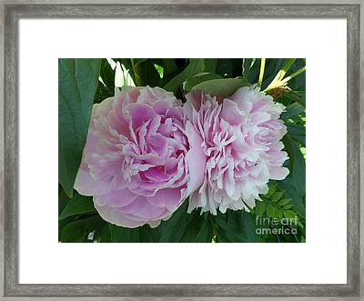 Pink Peonies 2 Framed Print by HEVi FineArt