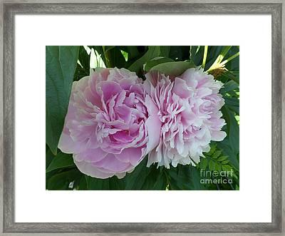 Pink Peonies 2 Framed Print