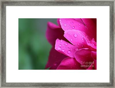 Framed Print featuring the photograph Pink Peony  by Ann E Robson