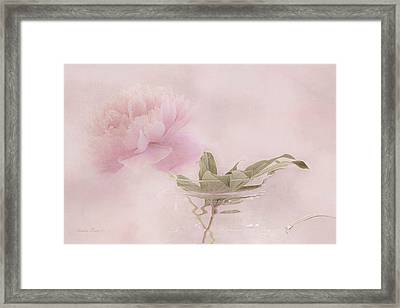 Pink Peony Blossom In Clear Glass Tea Pot Framed Print by Sandra Foster