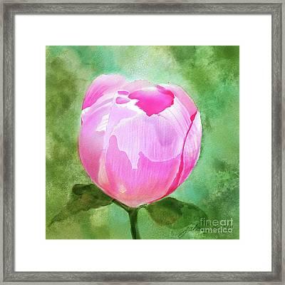 Pink Peony Bud Framed Print by Joan A Hamilton