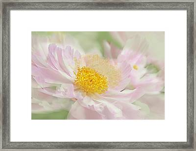 Pink Peony Flower  Framed Print by Jennie Marie Schell