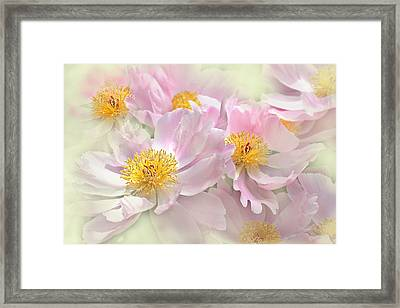 Pink Peony Flowers Parade Framed Print by Jennie Marie Schell