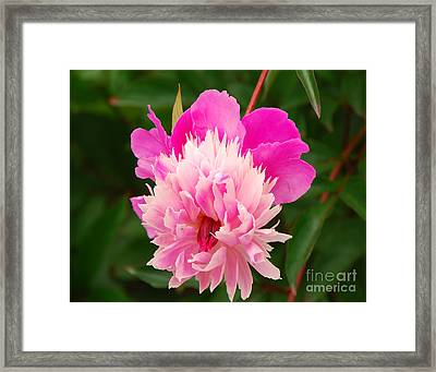 Framed Print featuring the photograph Pink Peony by Mary Carol Story