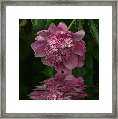 Pink Peony Reflection Framed Print