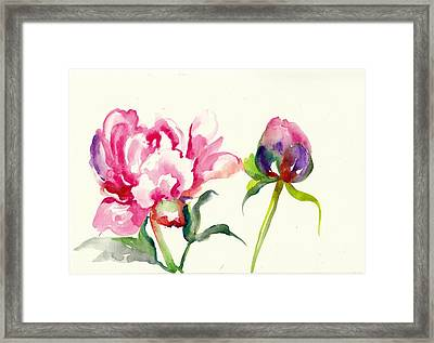 Pink Peony With Bud And Leaf Watercolor Framed Print