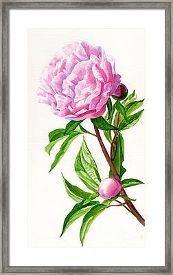 Pink Peony With Leaves Framed Print by Sharon Freeman