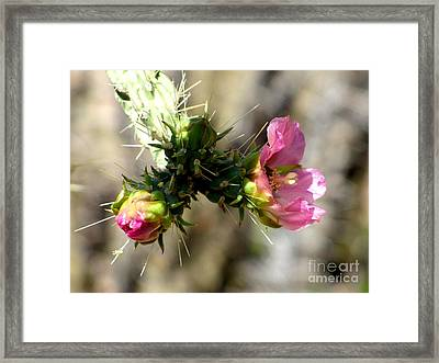 Pink  Perfection Framed Print by Marilyn Smith